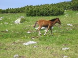 pony :: no rating :: no comments