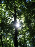 forest rays :: rating: 10.00 / 1 vote :: no comments