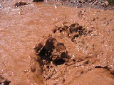 chocolate river :: no rating :: no comments